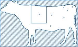 Rasa Fassona - wołowina w Nolio